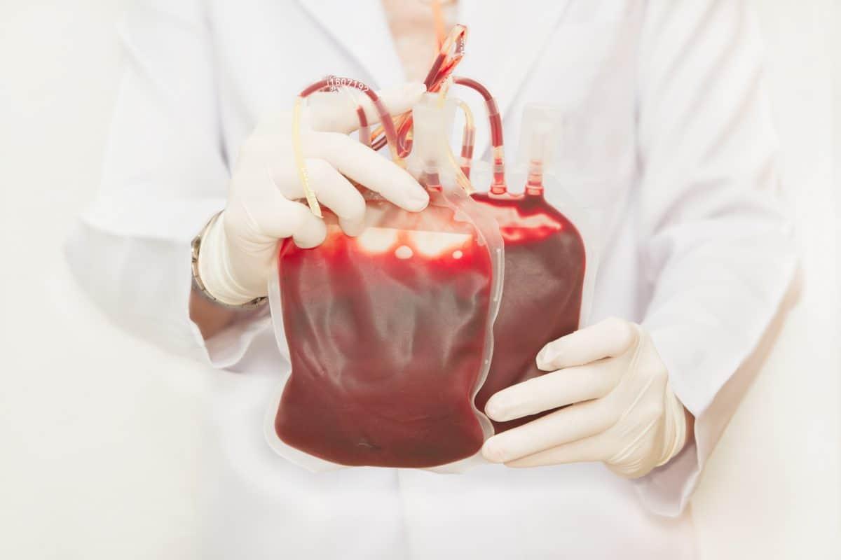 Transfuzja krwi u zwierząt