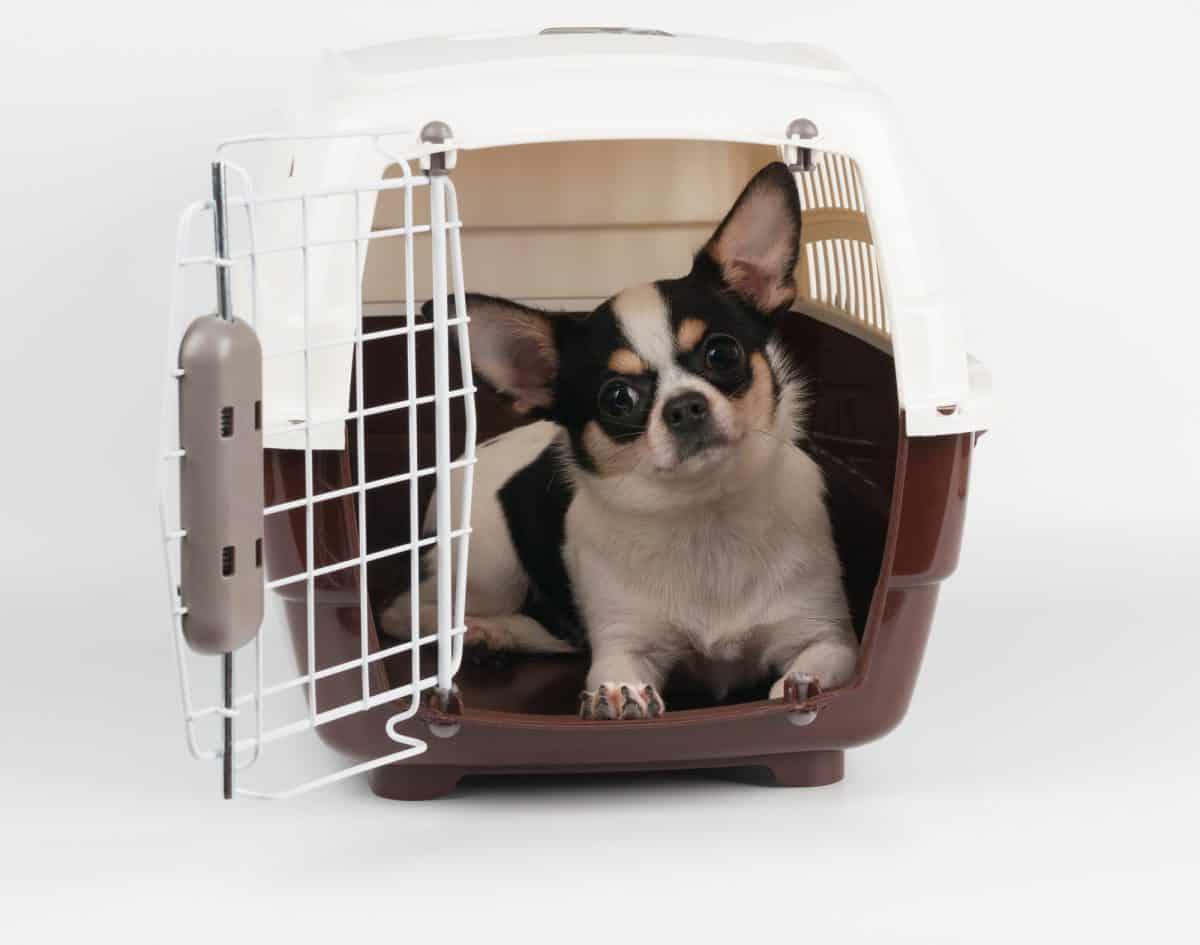 Zabrać zwierzaka czy zostawić do dylemat wyjeżdżających na dłużej.