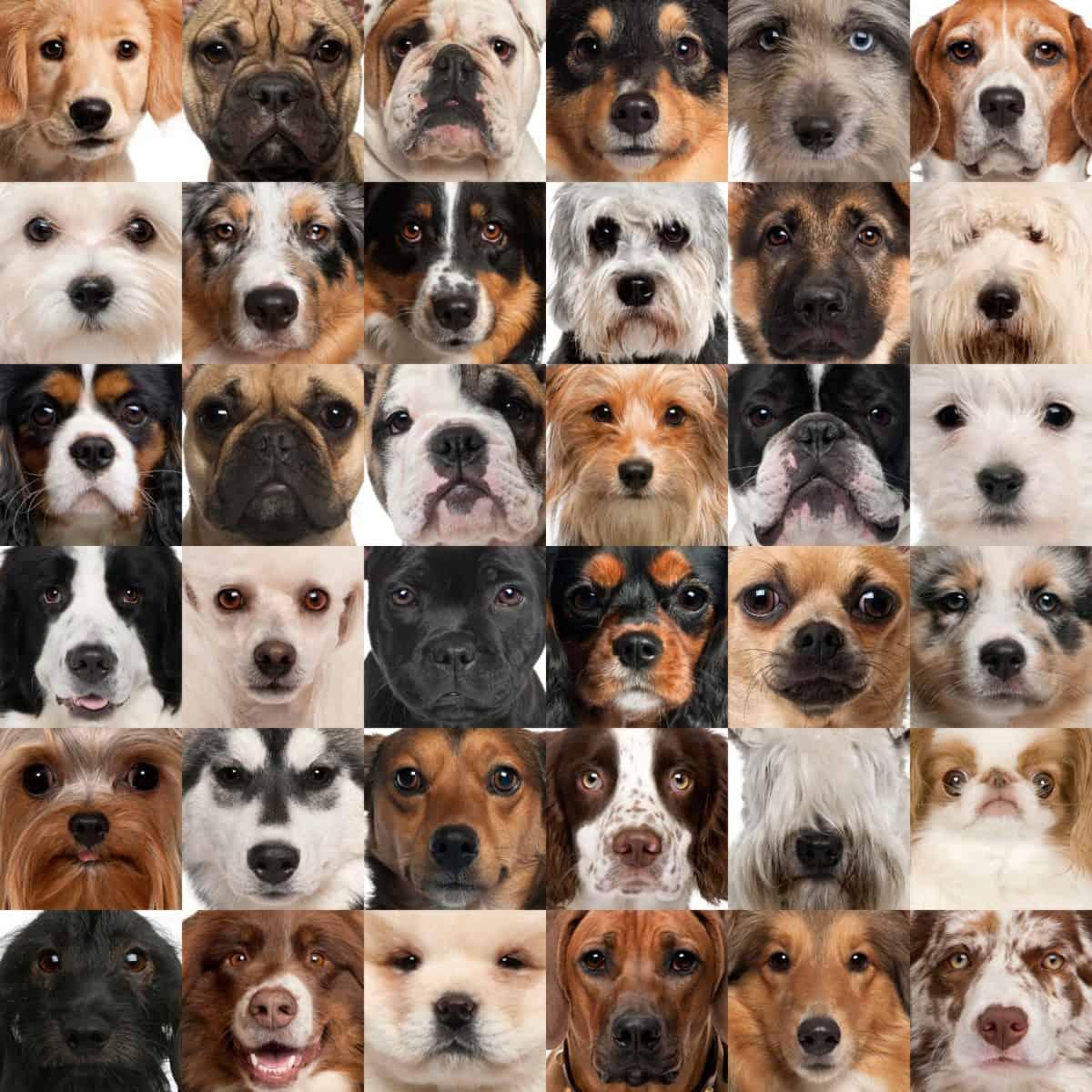 Rasy psów i sposoby tresury