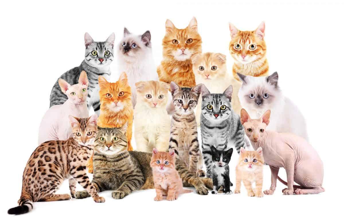 Jakiego kota wybrać - oto jest pytanie