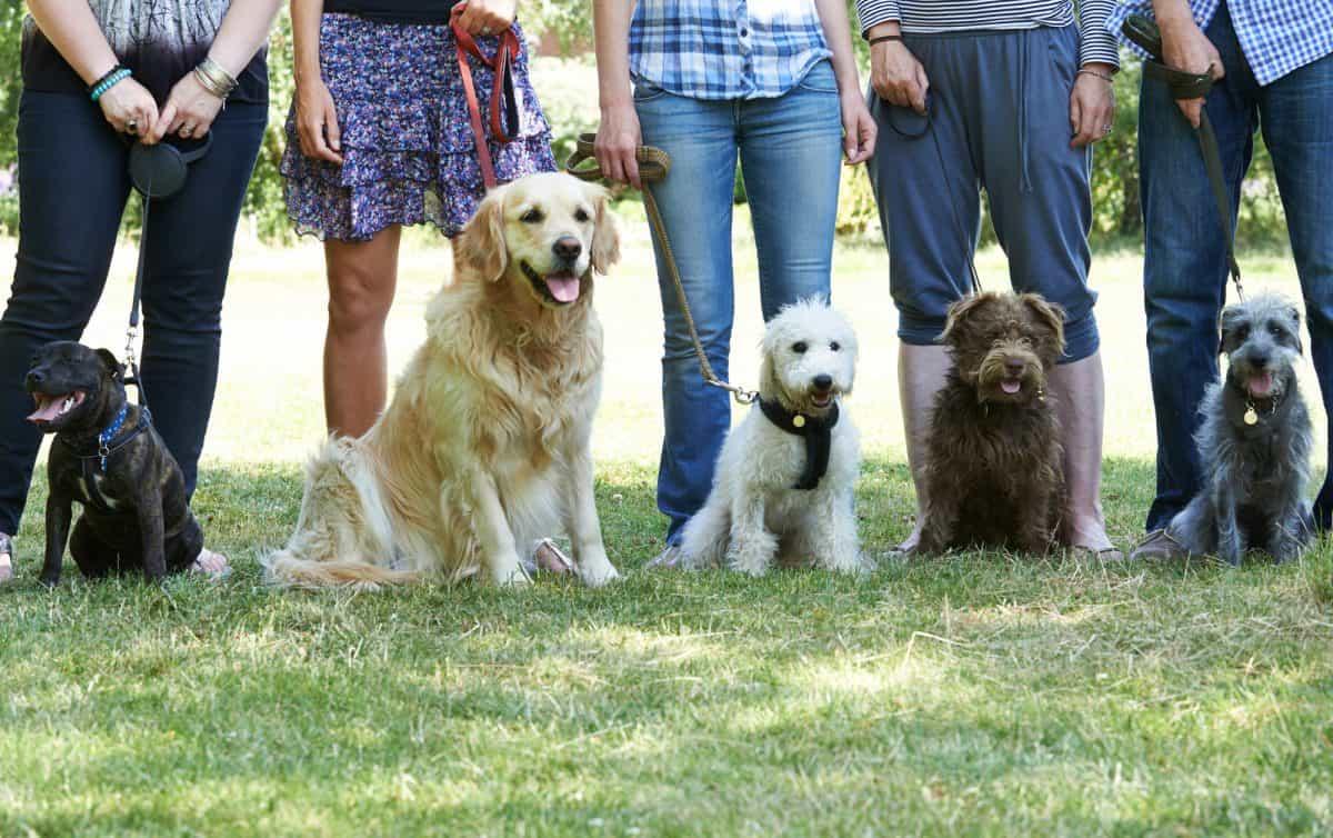 Różne rasy psów wymagają różnego podejścia