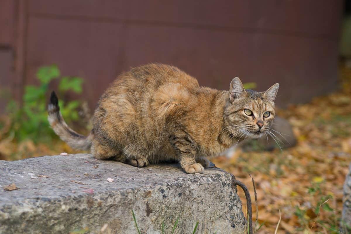 Adopcja kota ze schroniska to poważna decyzja.