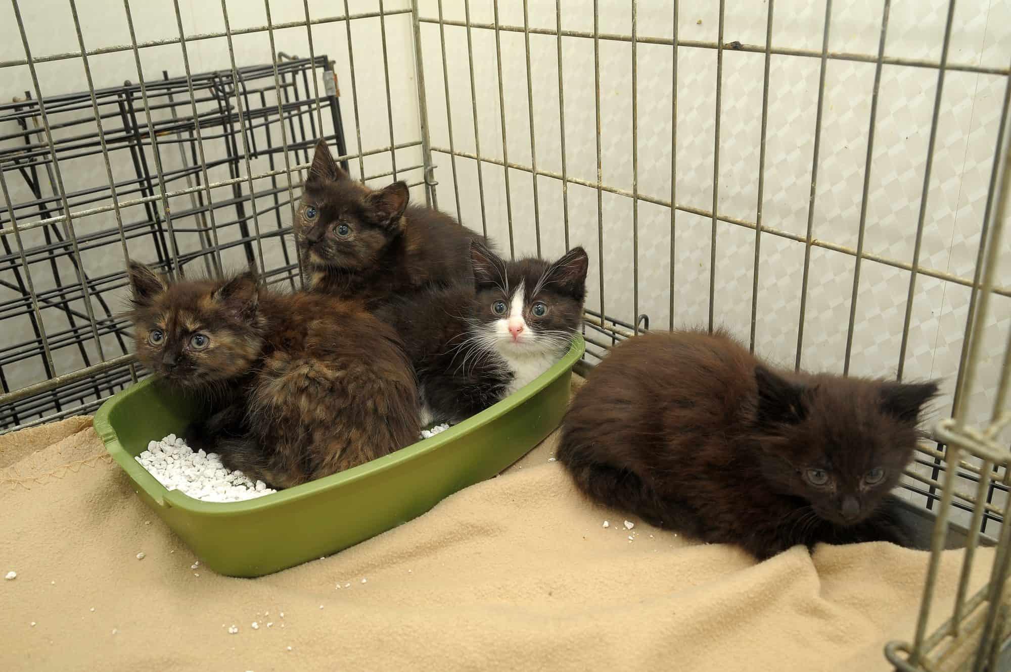 Adopcja kota ze schroniska