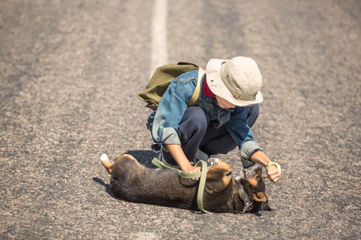 Zasłabnięcia i omdlenia u psów