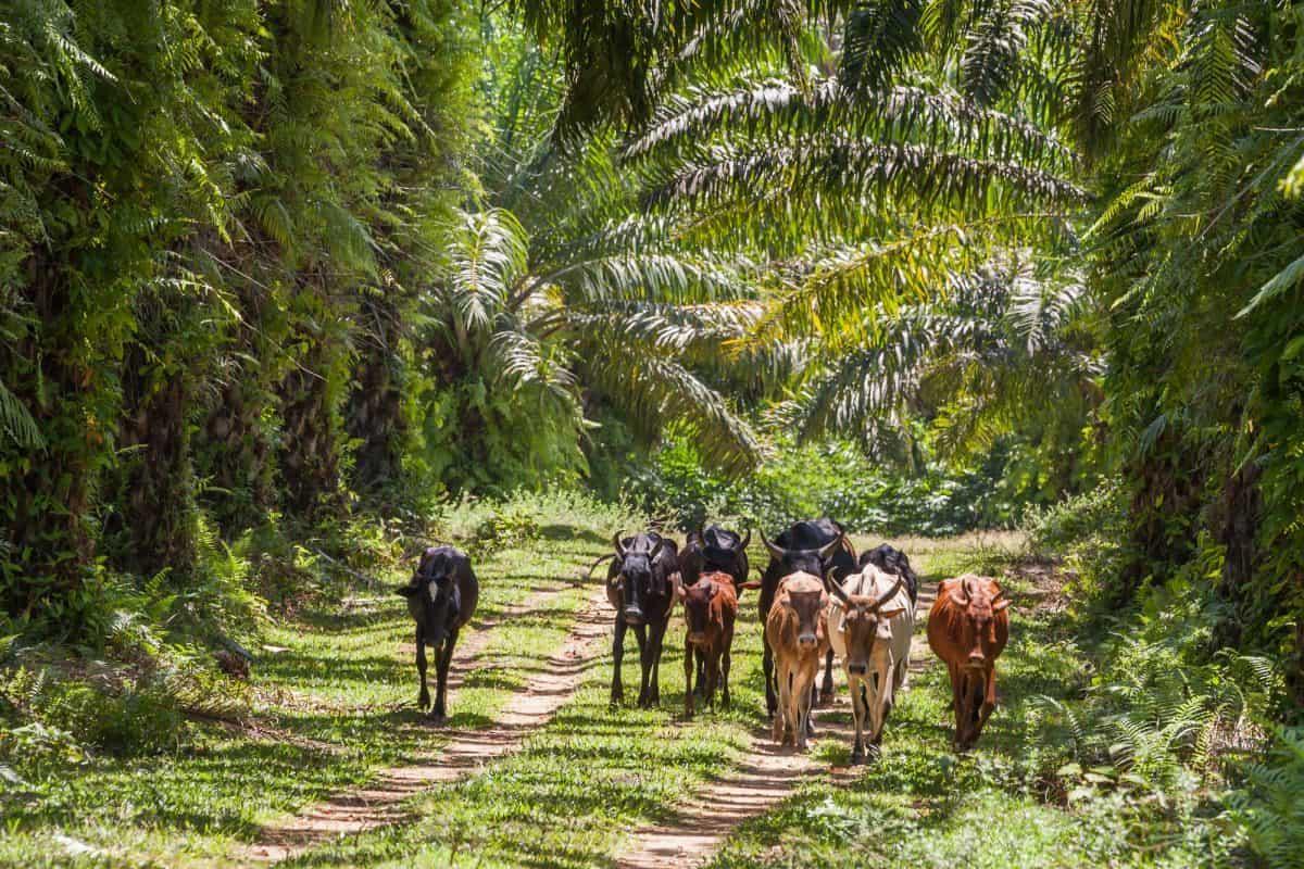Choroby tropikalne zwierząt