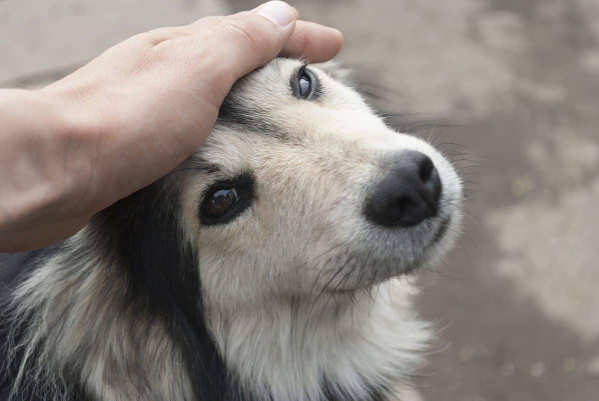 Głaskanie psa po głowie