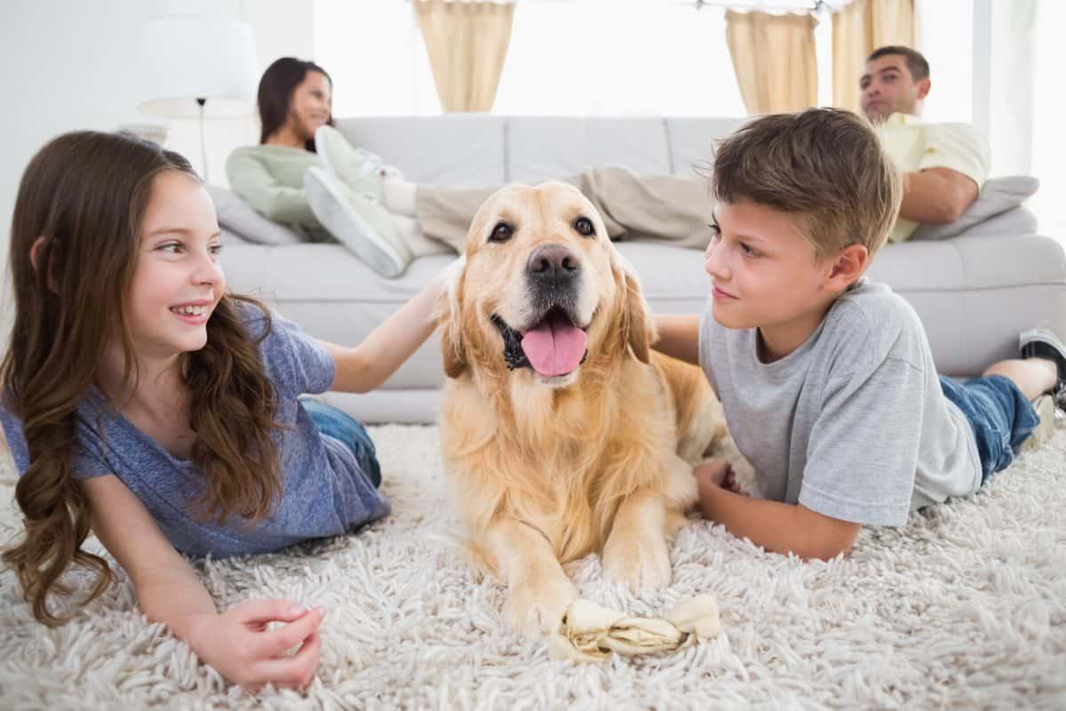 Głaskanie psa po głowie nie powinno być nagrodą.