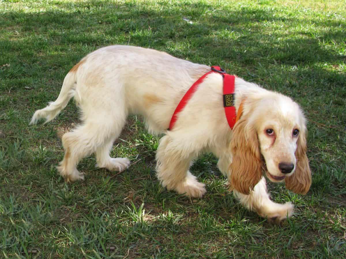 Ogon psa to barometr i termometr jednocześnie