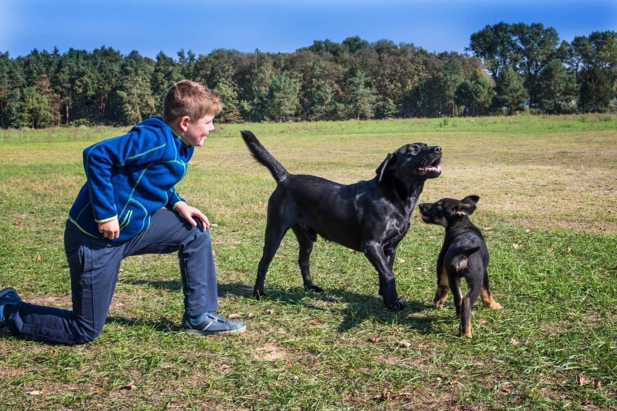 Pies zaczepia inne psy z ciekawości.