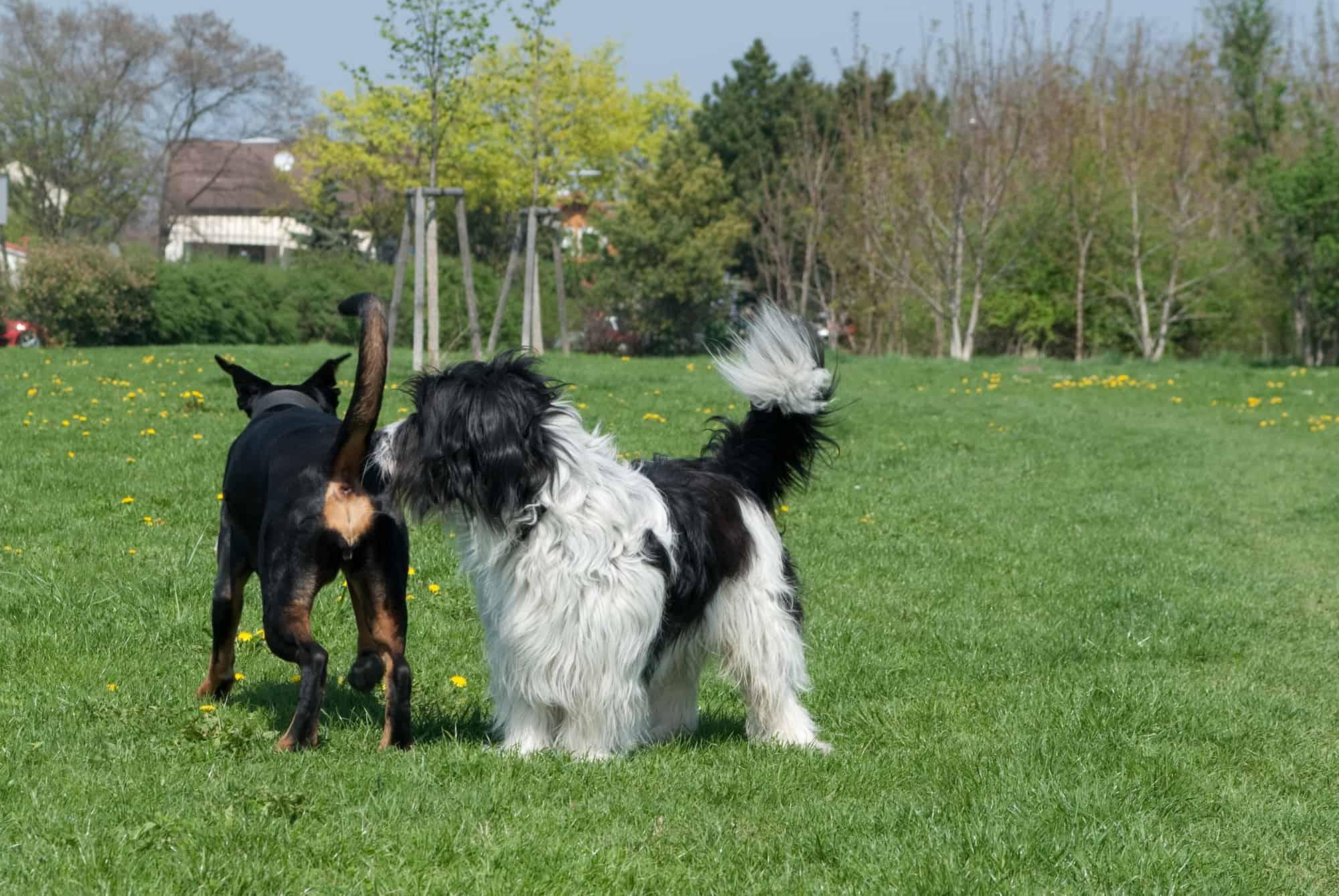 Grzbiet psa - mowa ciała