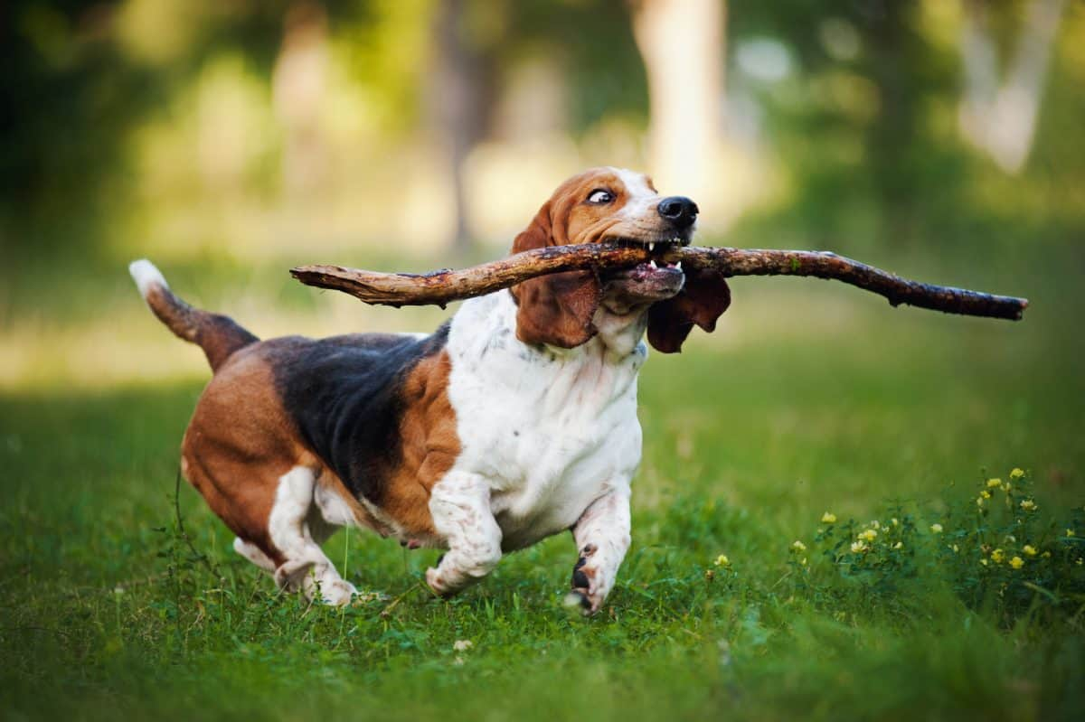 Aktywność dla psa nie zawsze jest wskazana.