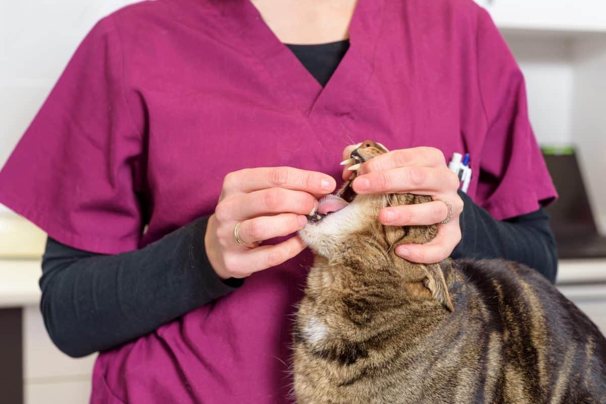 Odrobaczanie psa i kota to zabieg profilaktyczny
