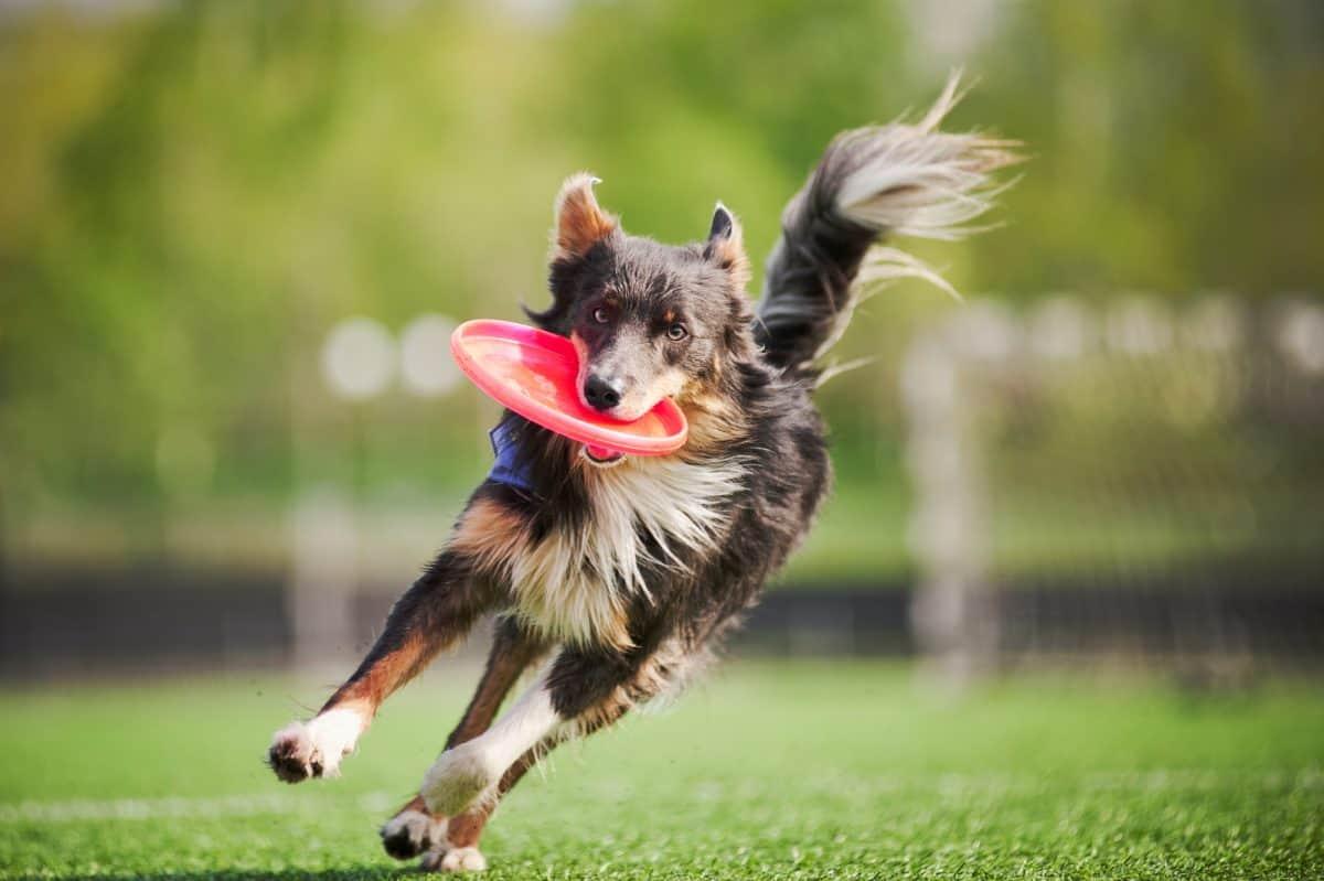 Aktywność dla psa i kota
