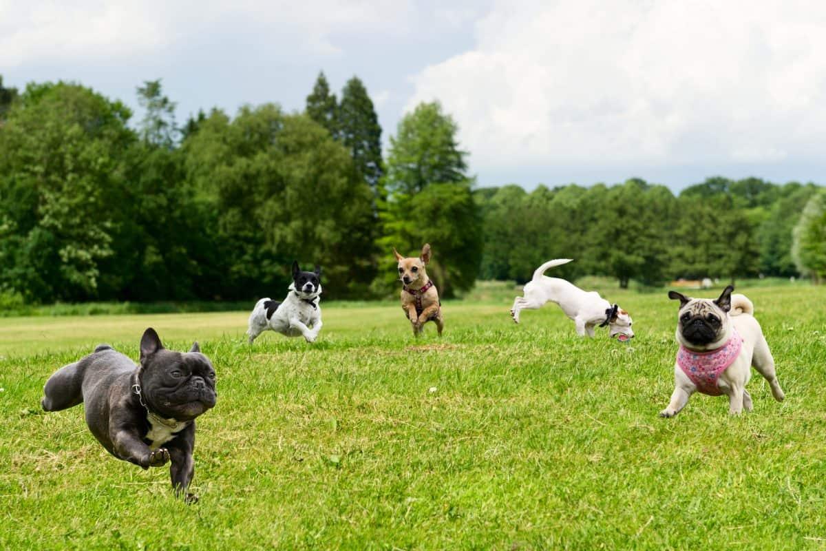 Ile ruchu potrzebuje pies, żeby cieszyć się zdrowiem?
