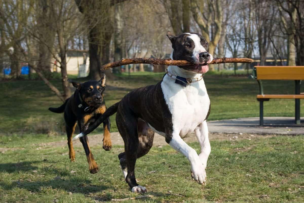 Ile ruchu potrzebuje pies?