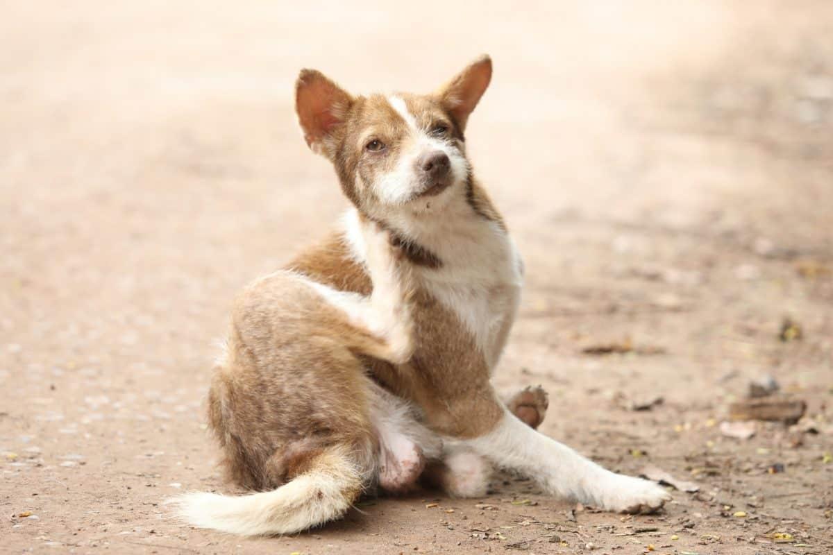 Pasożyty zewnętrzne i wewnętrzne u kotów i psów