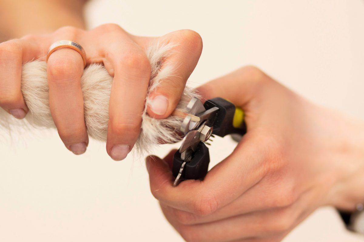 Odpadanie pazurów może świadczyć o chorobie autoimmunologicznej