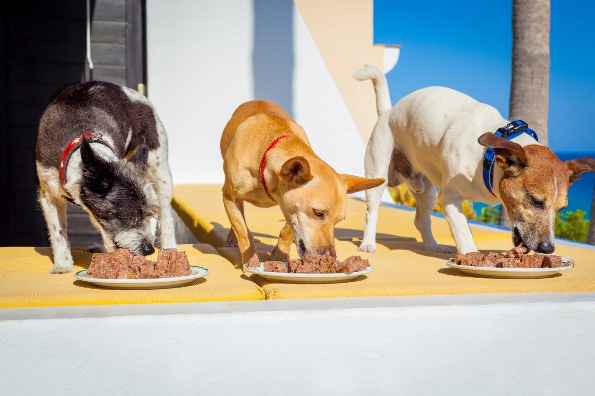 Karma - jaka jest najlepsza dla psa?