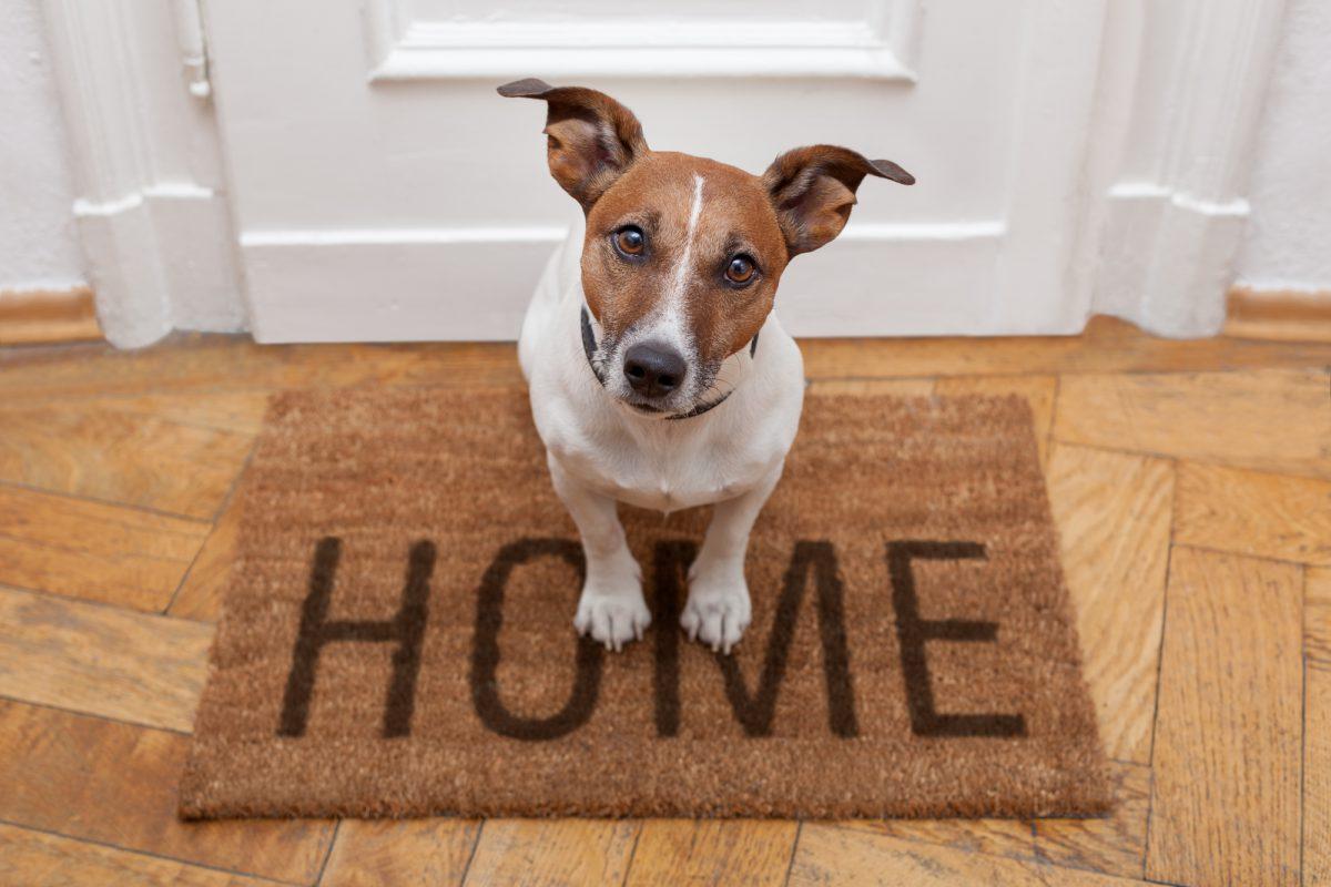 Adopcja psa lub kota to odpowiedzialność