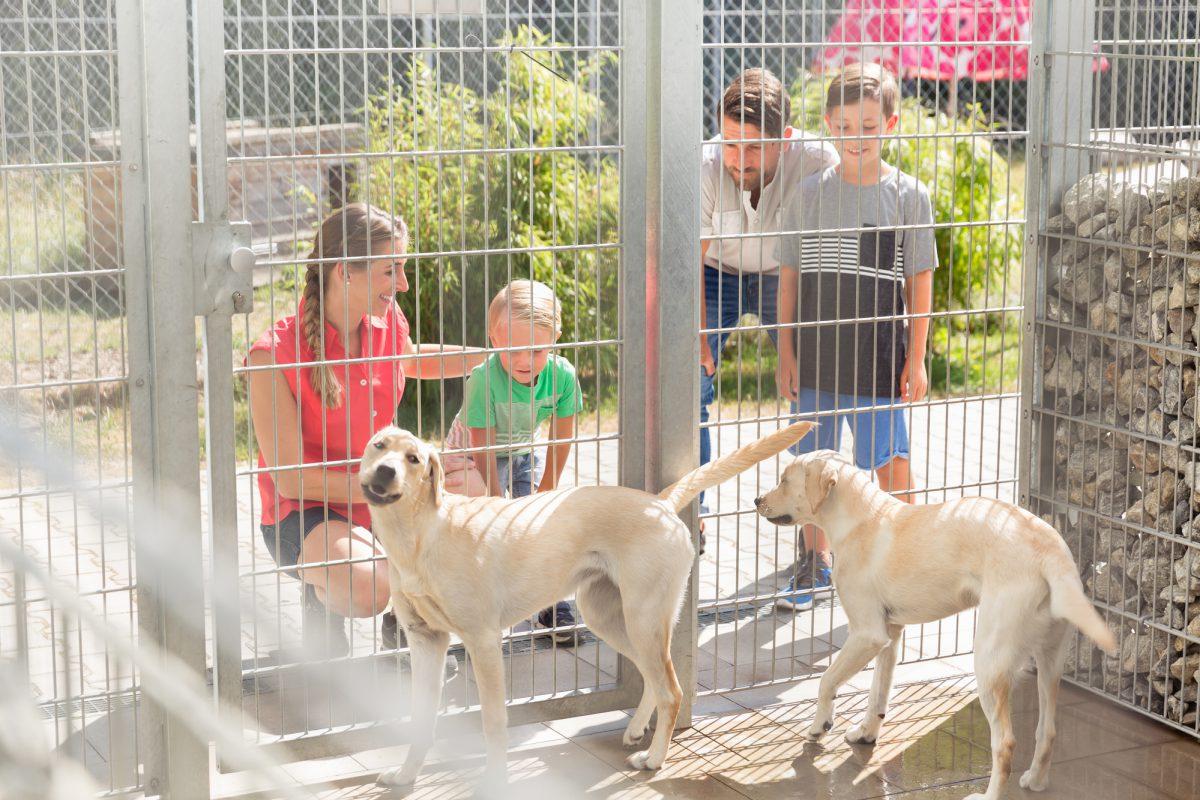 Adopcja psa lub kota ze schroniska