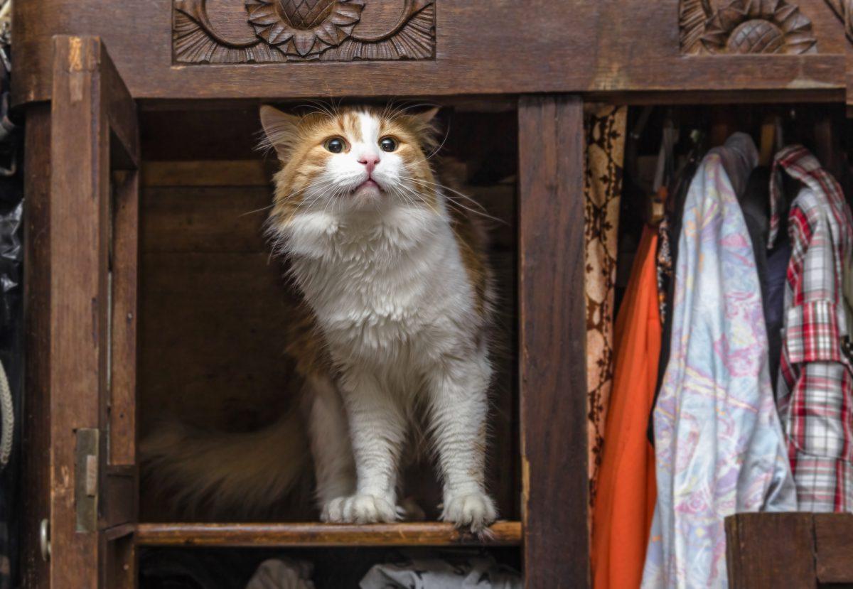 Mieszkanie dla kota powinno uwzględniać jego potrzeby.