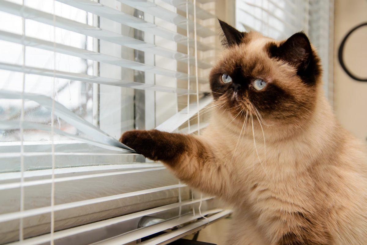 Mieszkanie dla kota - jak je urządzić?