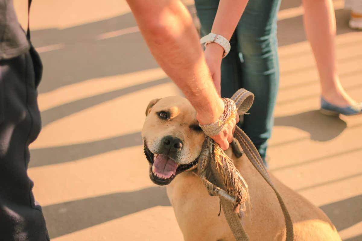Behawiorysta jest bardzo potrzebny w schronisku dla zwierząt.