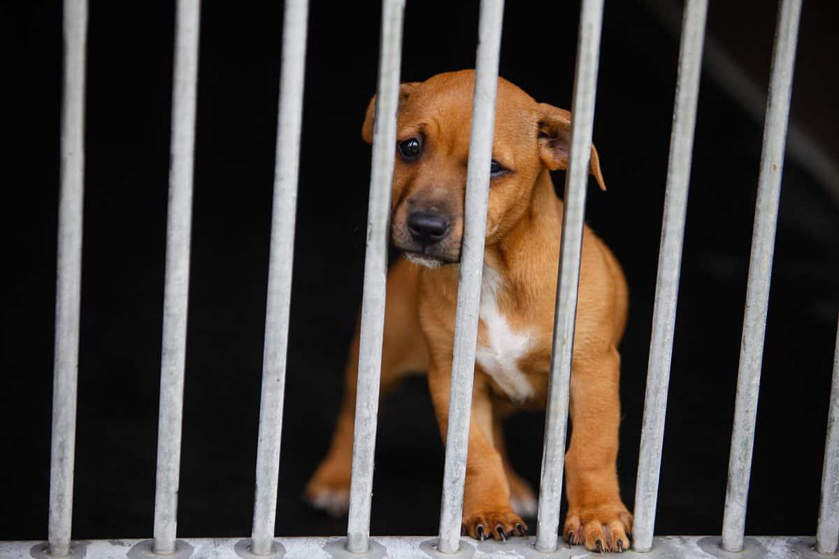 Pies w schronisku - co czuje? Jak się zachowuje?