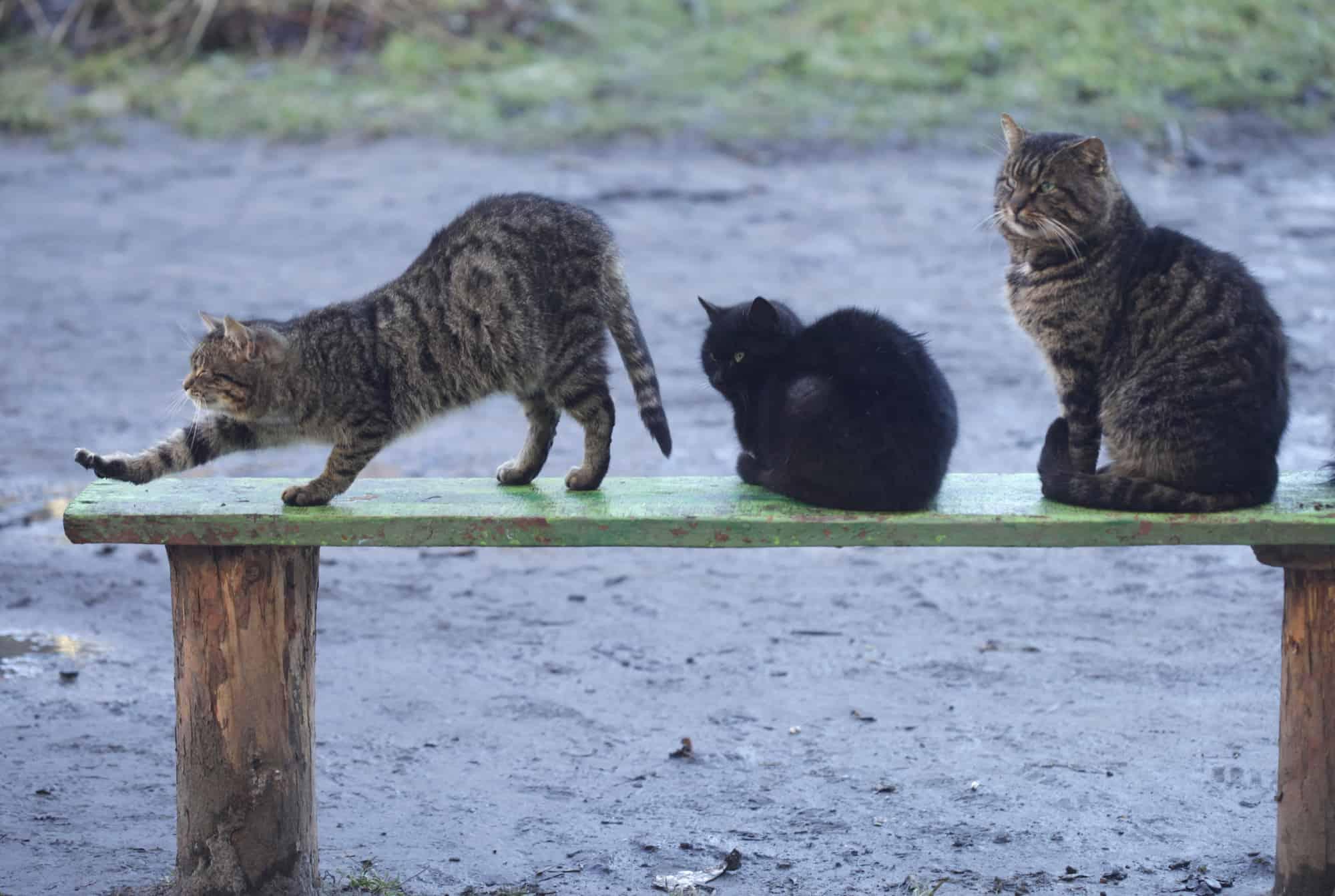 Choroby kotów żyjących na wolności