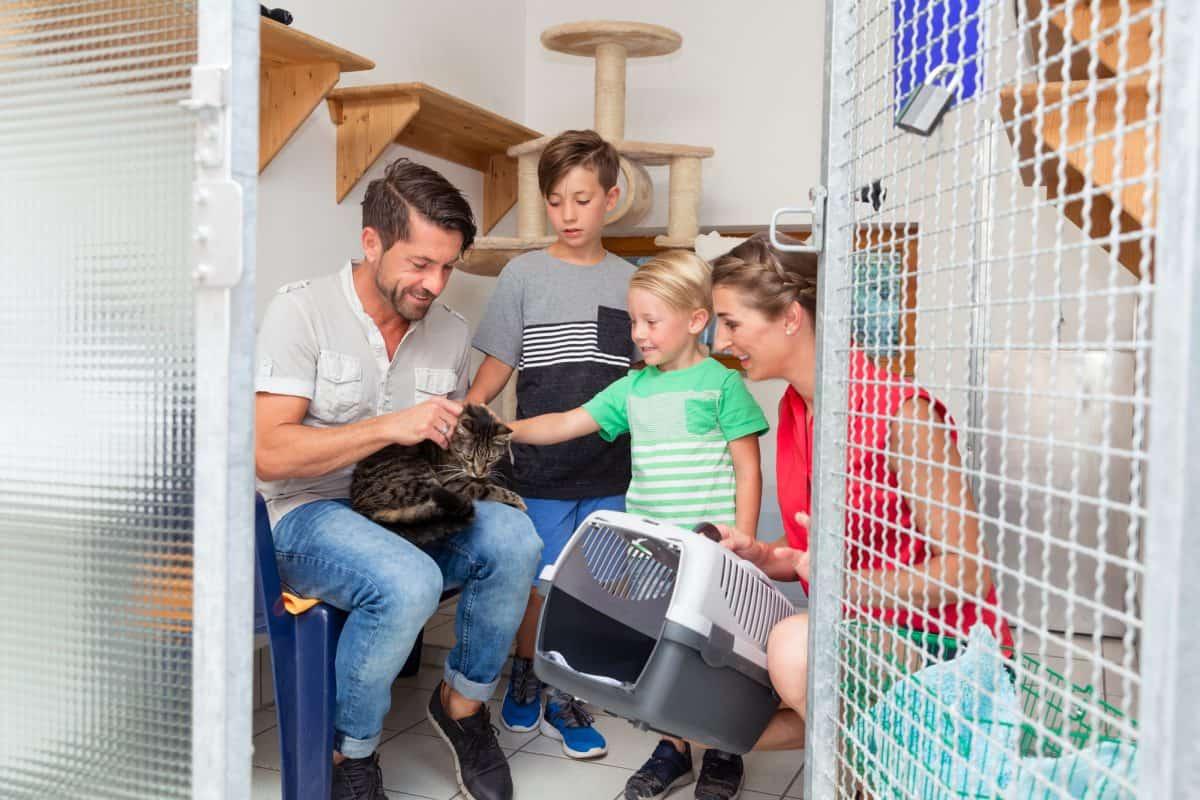 Adopcja kota ze schroniska to odpowiedzialność wszystkich domowników.