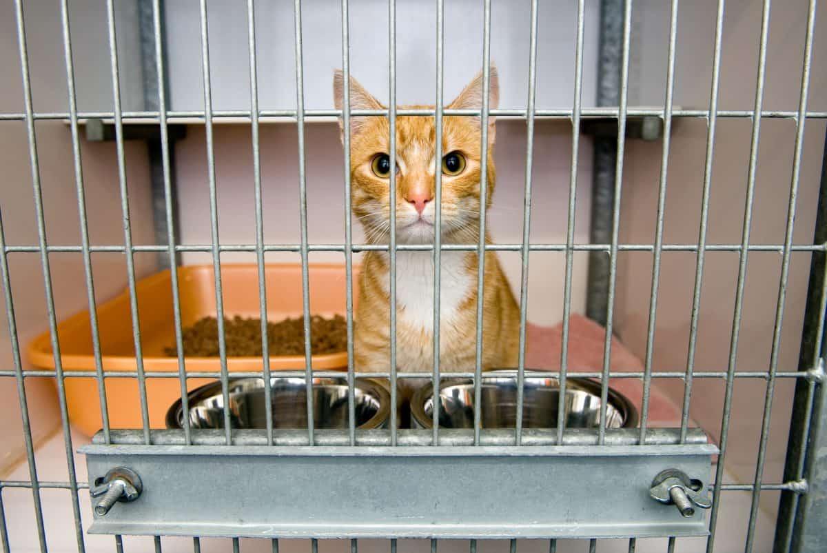 Adopcja kota ze schroniska - jakie problemy mogą się pojawić?