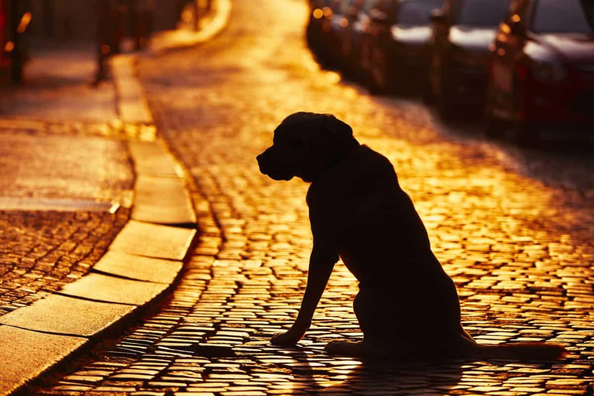 Zguba - co robić, gdy znajdziemy psa?
