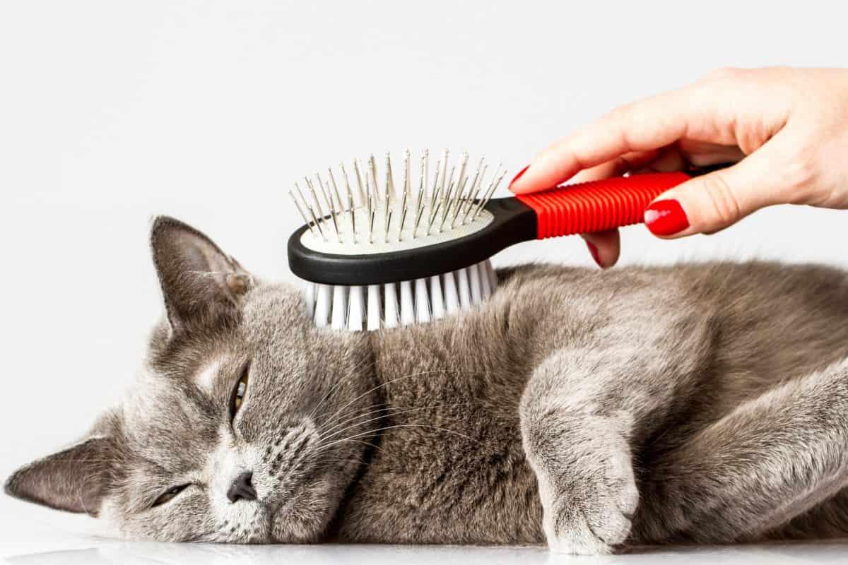Jak głaskać kota? Raczej nie pod włos.