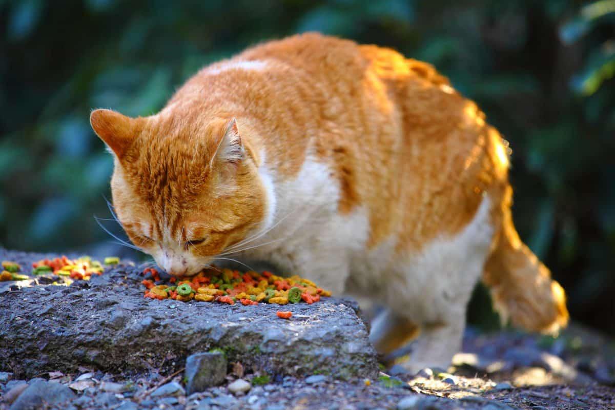 Bezdomne koty w mieście potrzebuja pomocy człowieka.