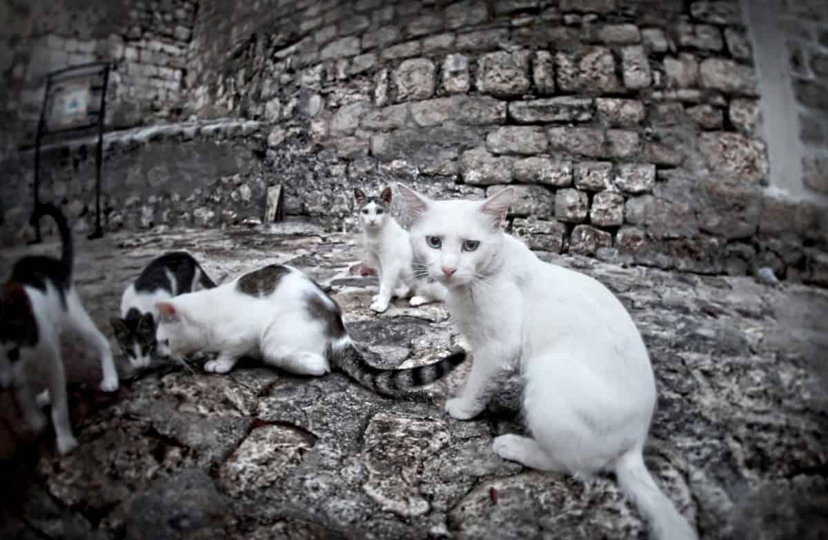 Bezdomne koty w mieście - jak im pomagać?