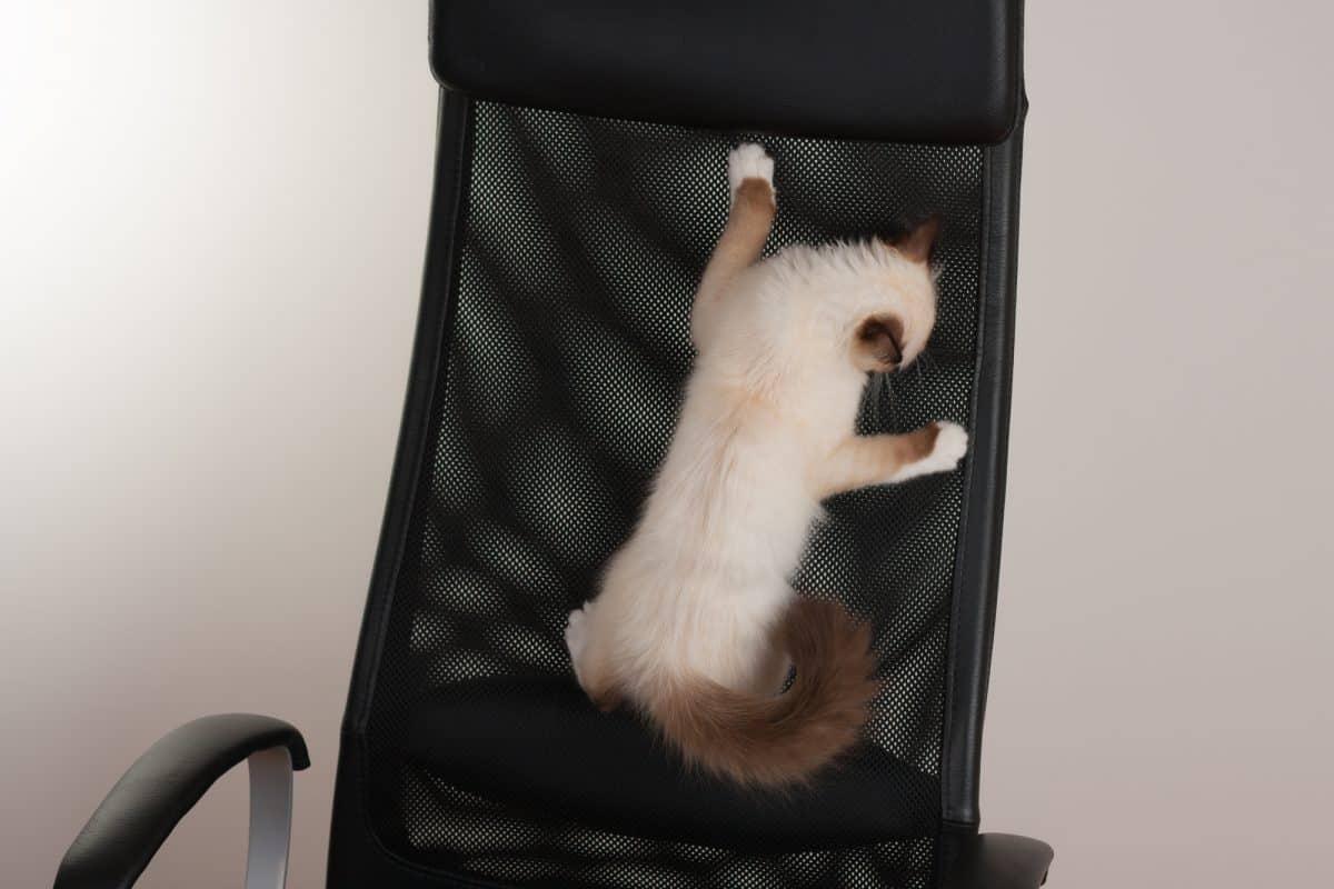 Jak wychować kociaka - trzy wymiary.