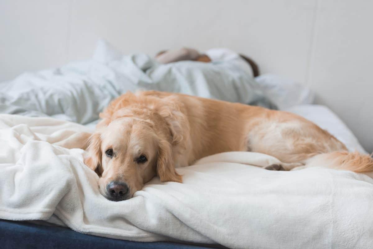 Jak oduczyć psa złych nawyków? Najlepiej od razu uczyć dobrych.