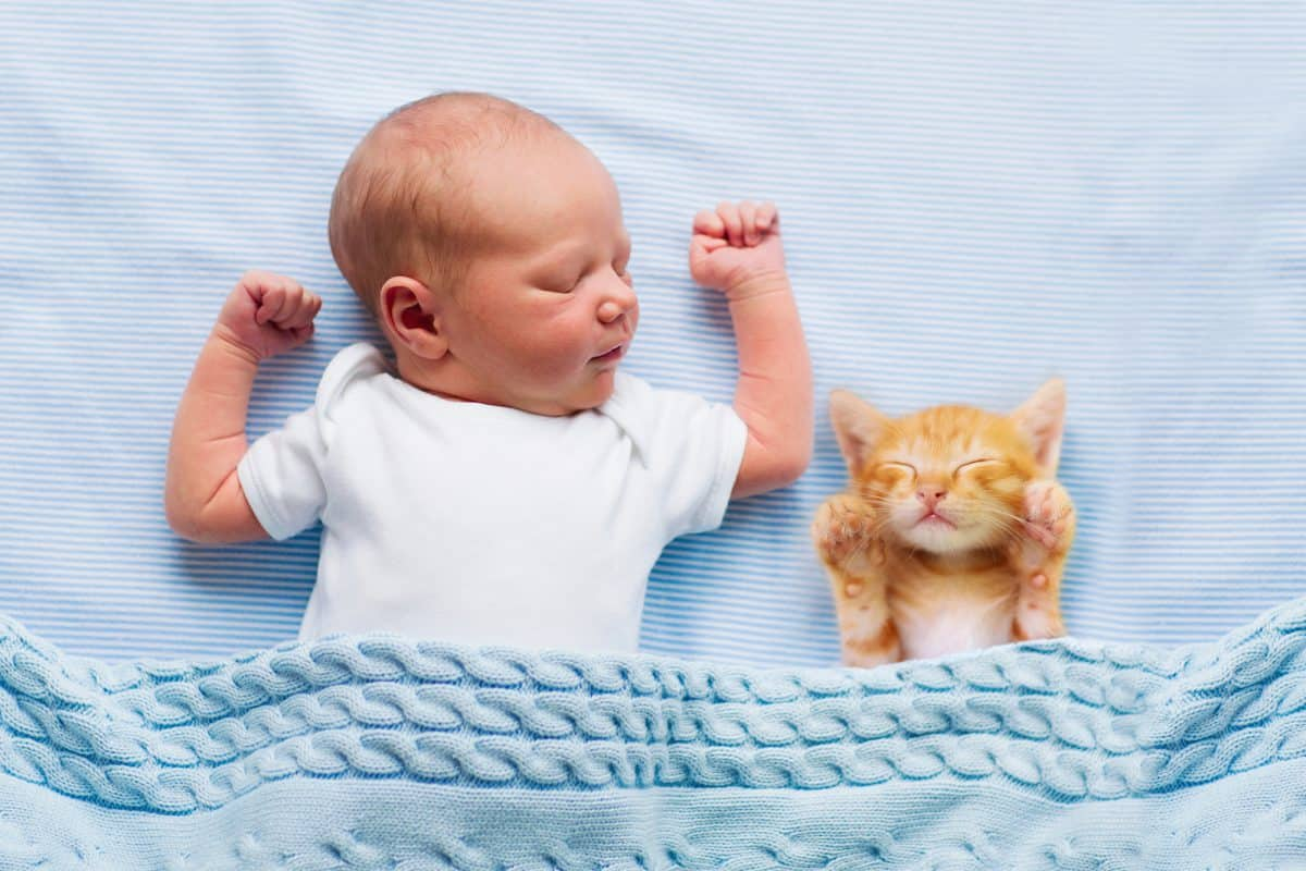 Kot i małe dziecko - jak przygotować zwierzaka na pojawienie się nowego domownika?