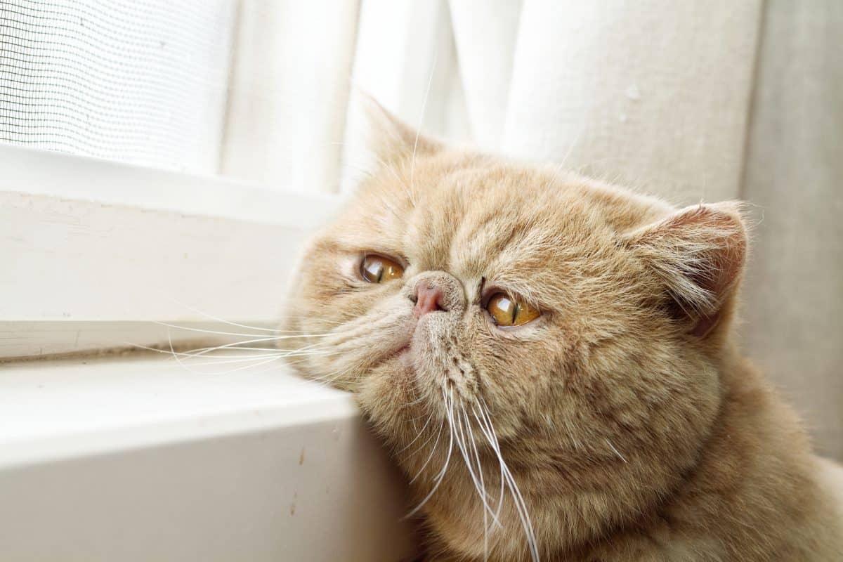 Jak kot reaguje na to, co się wokół niego dzieje.