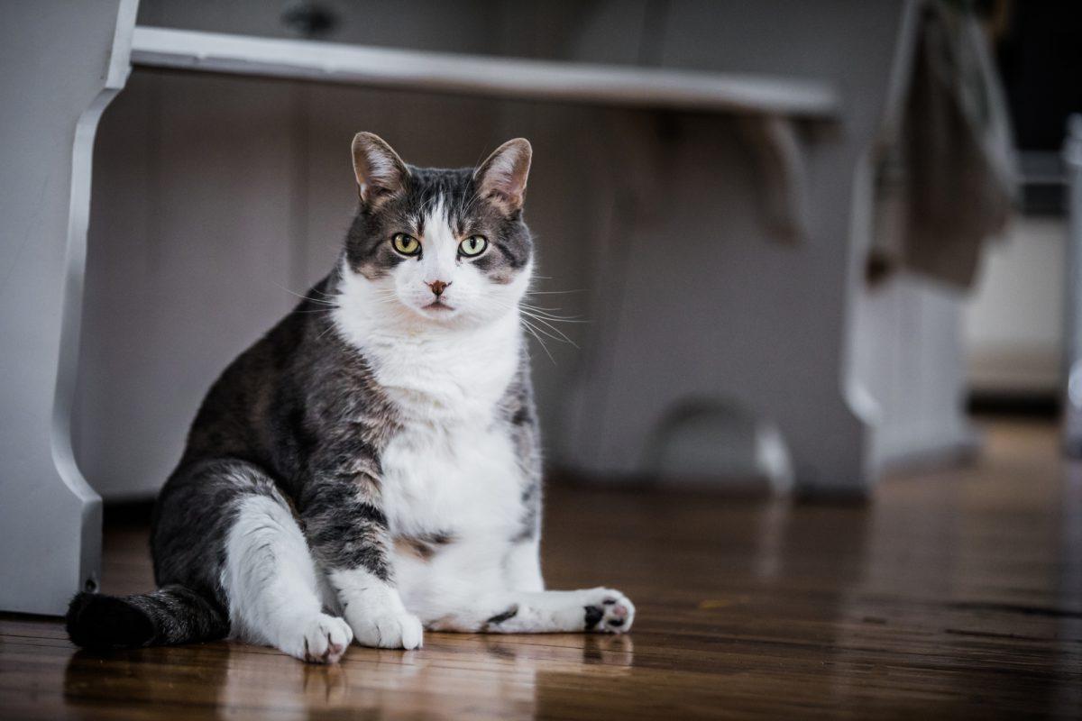 Kot senior ma swoje potrzeby