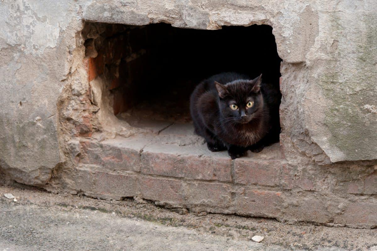 Koty miejskie są potrzebne.