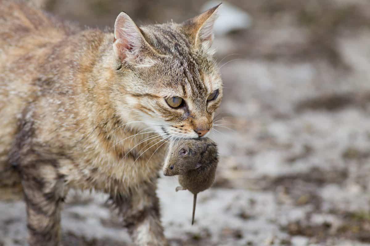 Czym karmić kota? Karma mokra czy sucha?