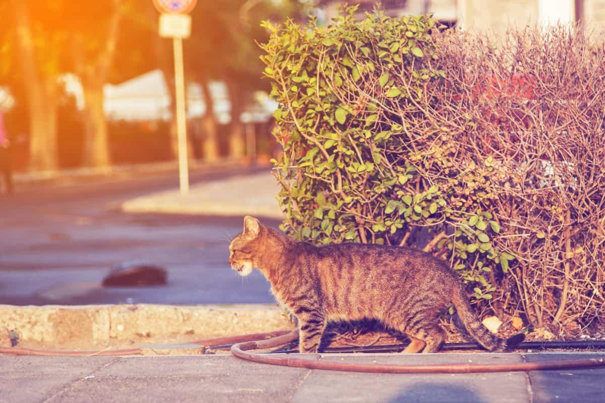 Koty miejskie - co to za gatunek? Czy są potrzebne?