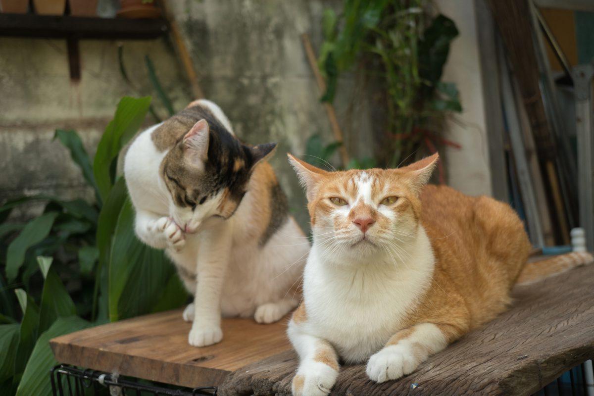 Kot domowy, który wychodzi na dwór - za i przeciw