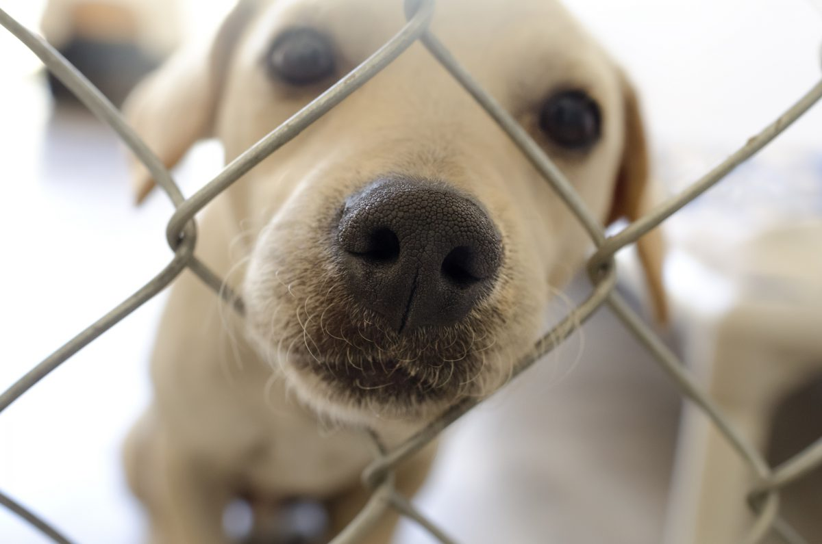 Schronisko dla bezdomnych zwierząt na Paluchu - jak funkcjonuje? Jak pomóc?