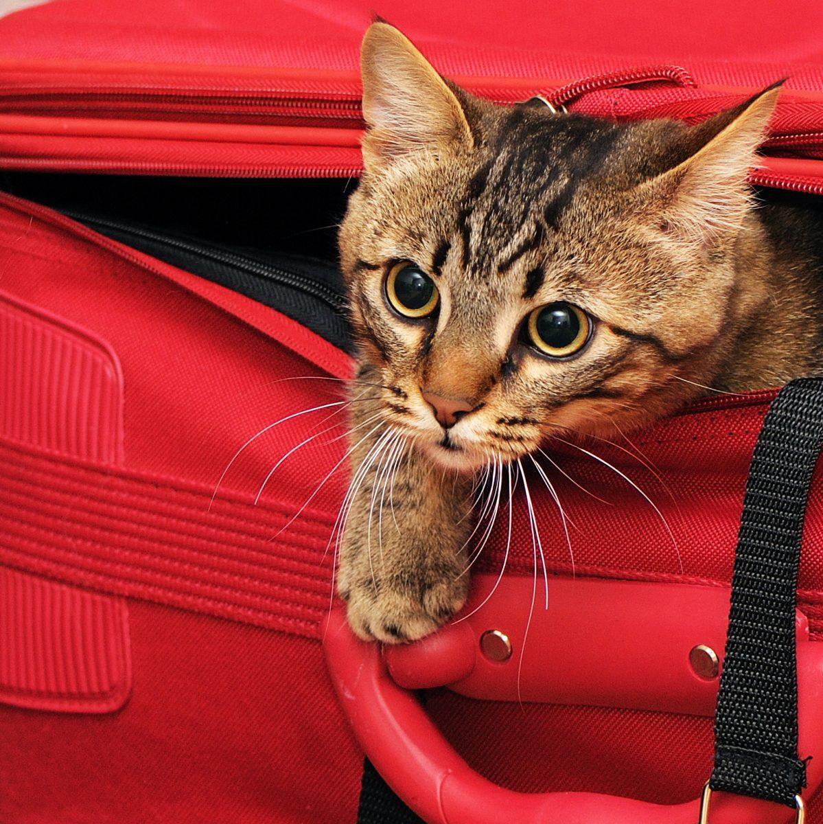Kot domowy ma swoje potrzeby wynikające z jego natury drapieżnika.