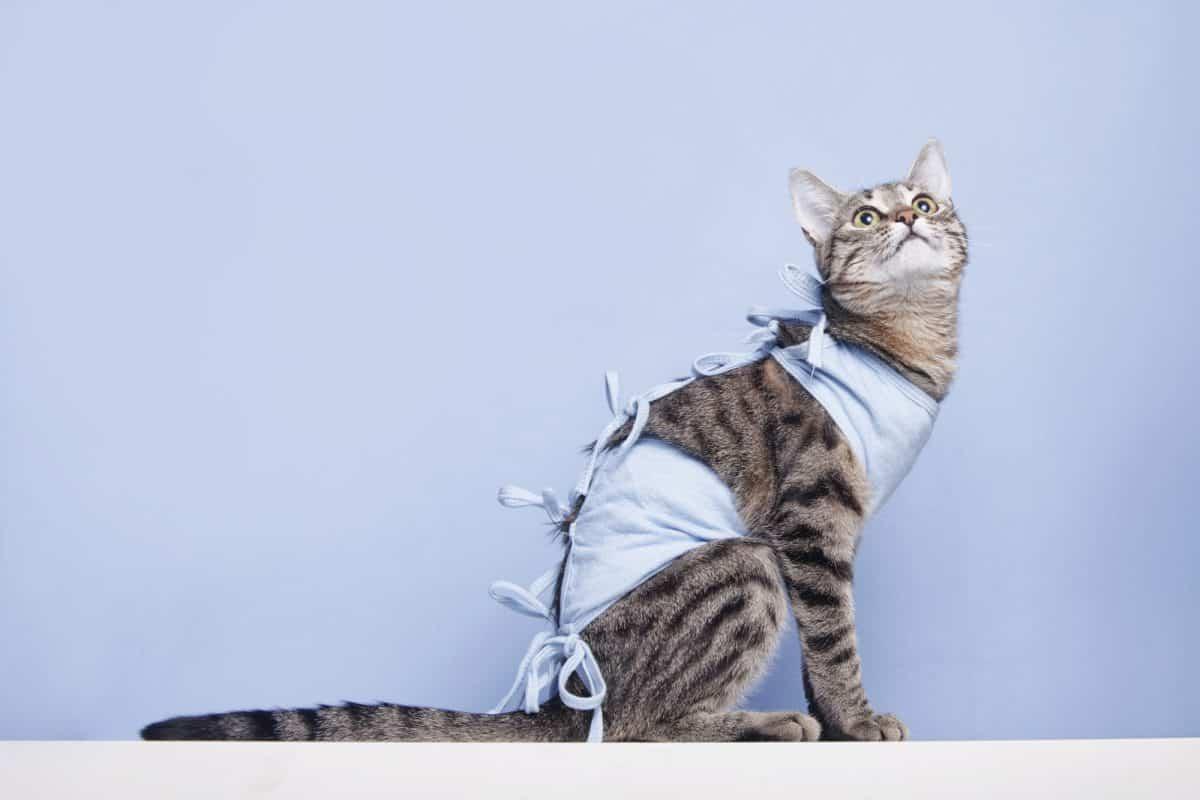 Sterylizacja dzikich kotów jest bardzo potrzebna