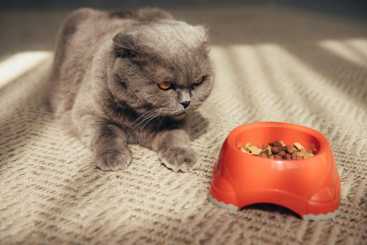 Co koty lubią - ryba czy mięso?
