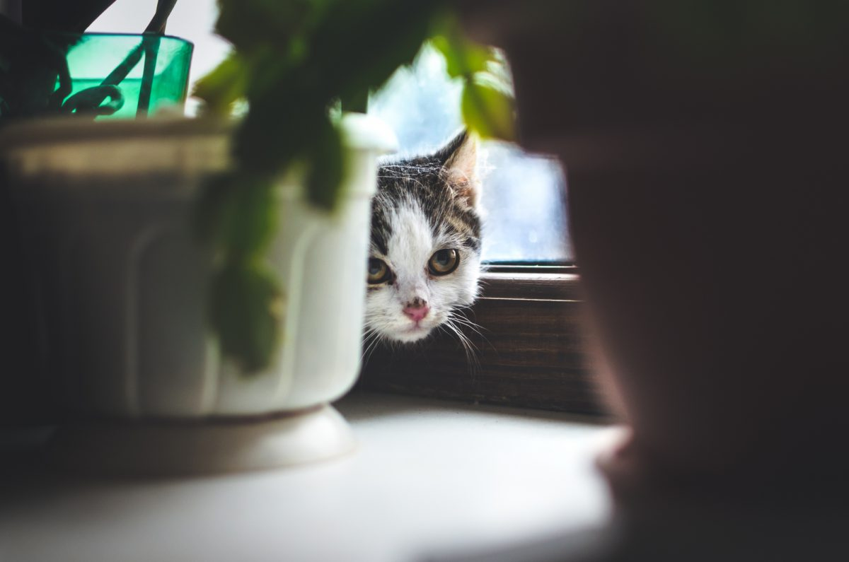 Nowy kot w domu to dla pozostałych kotów stres.
