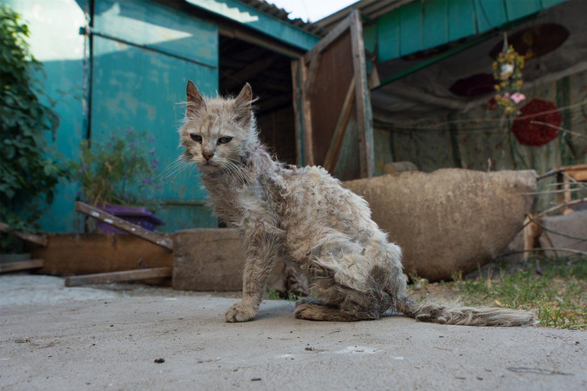 Eutanazja kota